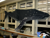 Humpback calf in classroom