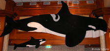 Orca adult & baby